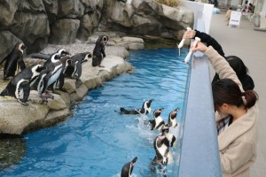 penguin-feeding